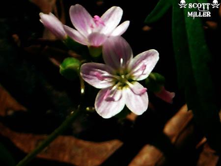 DSCN1705-2_2011-04-20.jpg