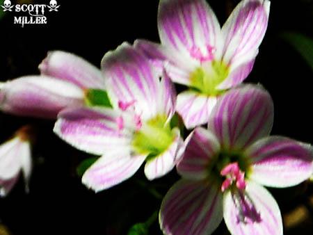 DSCN1706_2011-04-20-2.jpg