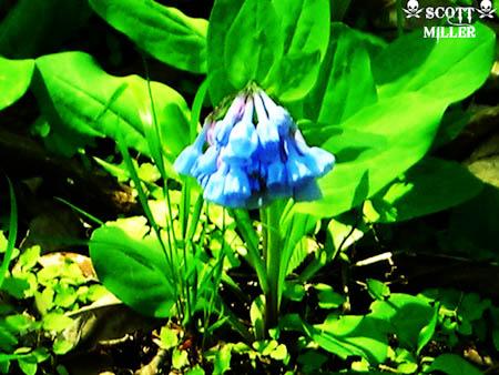DSCN1711_2011-04-20.jpg