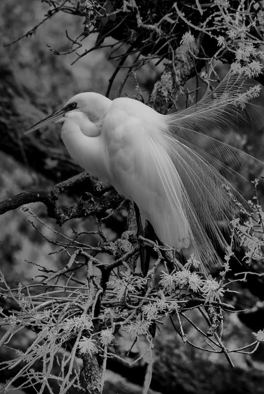 irbirds128160874.jpg